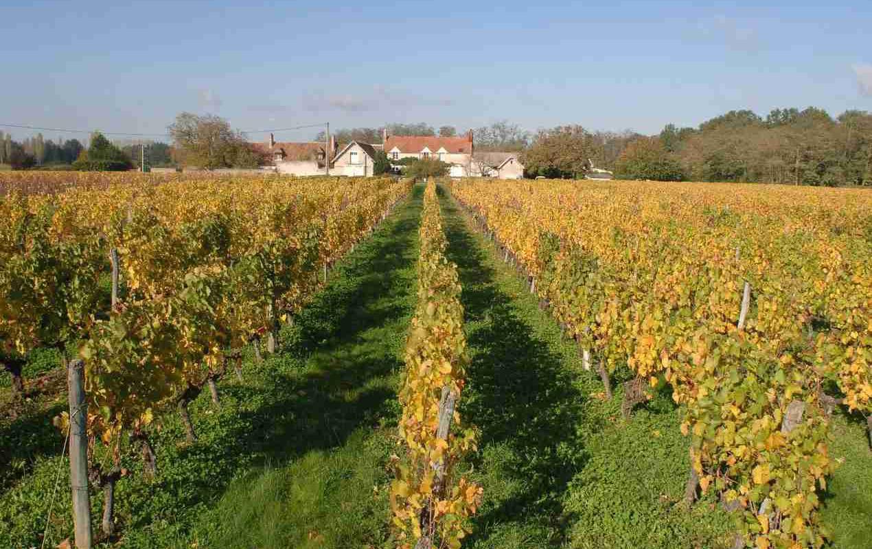 """Image décrivant le produit AOP Cheverny blanc """" Domaine du petit Chambord """" 12cl qui fait partie des Vins Blanc"""
