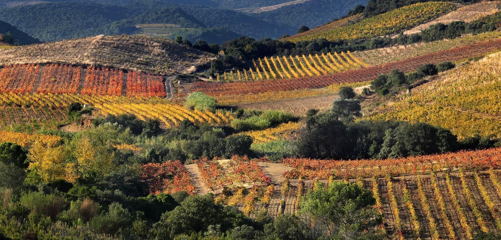 """Image décrivant le produit IGP Pays d'Oc Les Jamelles """"Carignan"""" 12cl qui fait partie des Vins Rouge"""