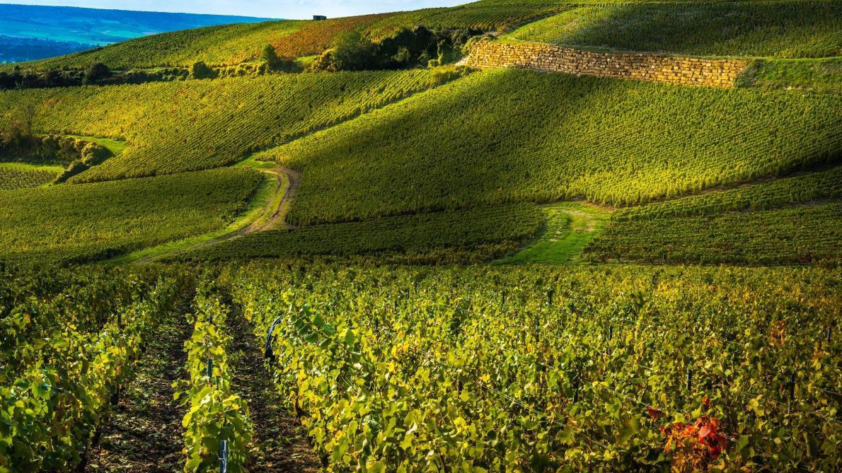 Image décrivant le produit Prosecco Sartori 12cl qui fait partie des Champagnes